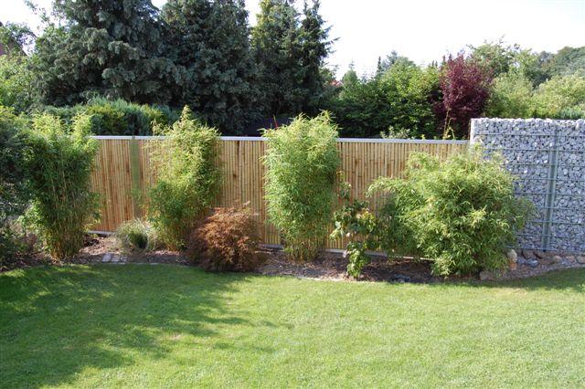 Edelstahl Bambus Sichtschutz : Bambus mit Edelstahl und Gabione